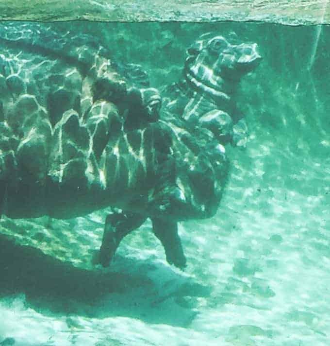baby hippo san diego zoo