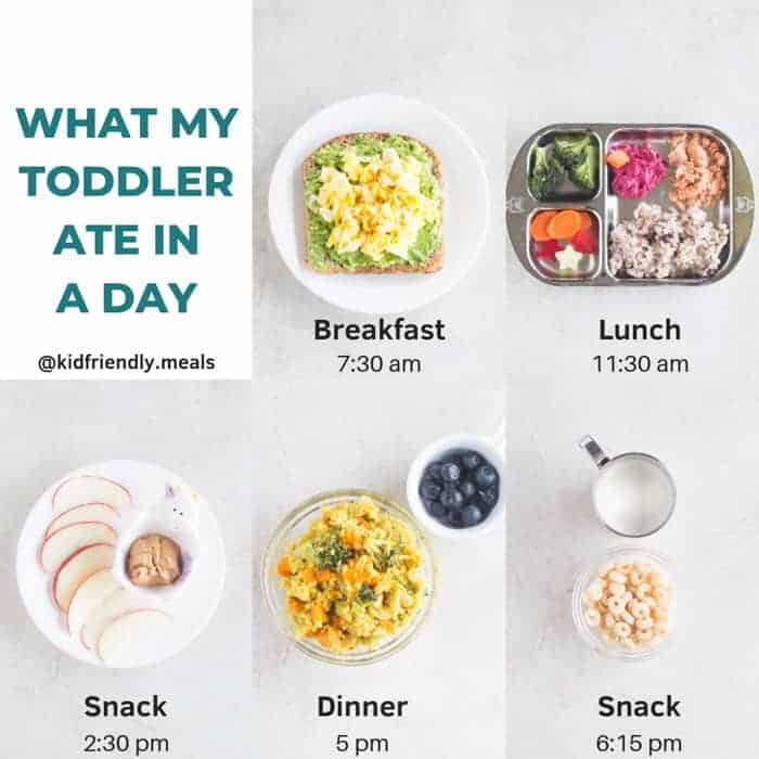 a graphic showing what my toddler ate in a day with mealtime schedule